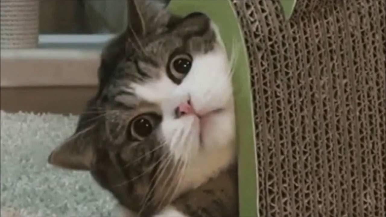 【猫おもしろ】vine Twitter で人気のおもしろネコ動画 まとめ!! , YouTube