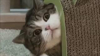 チャンネル登録お願いします→http://bit.ly/2cuk9xo 猫 おもしろ、かわ...