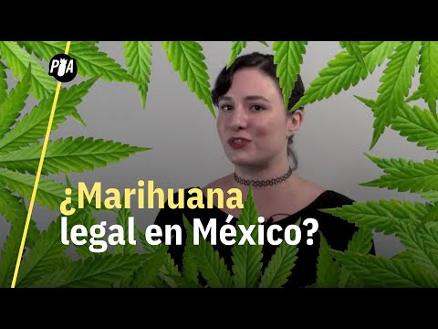 ¿Cómo conseguir marihuana legal en México?