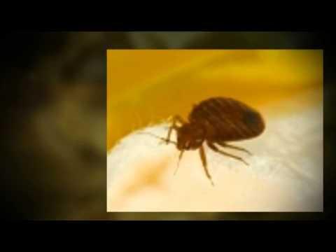 Central Coast Termite Pest Control Pest Control Nipomo Ca Youtube