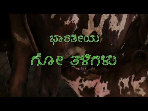 Indian Cow Breeds - Kannada