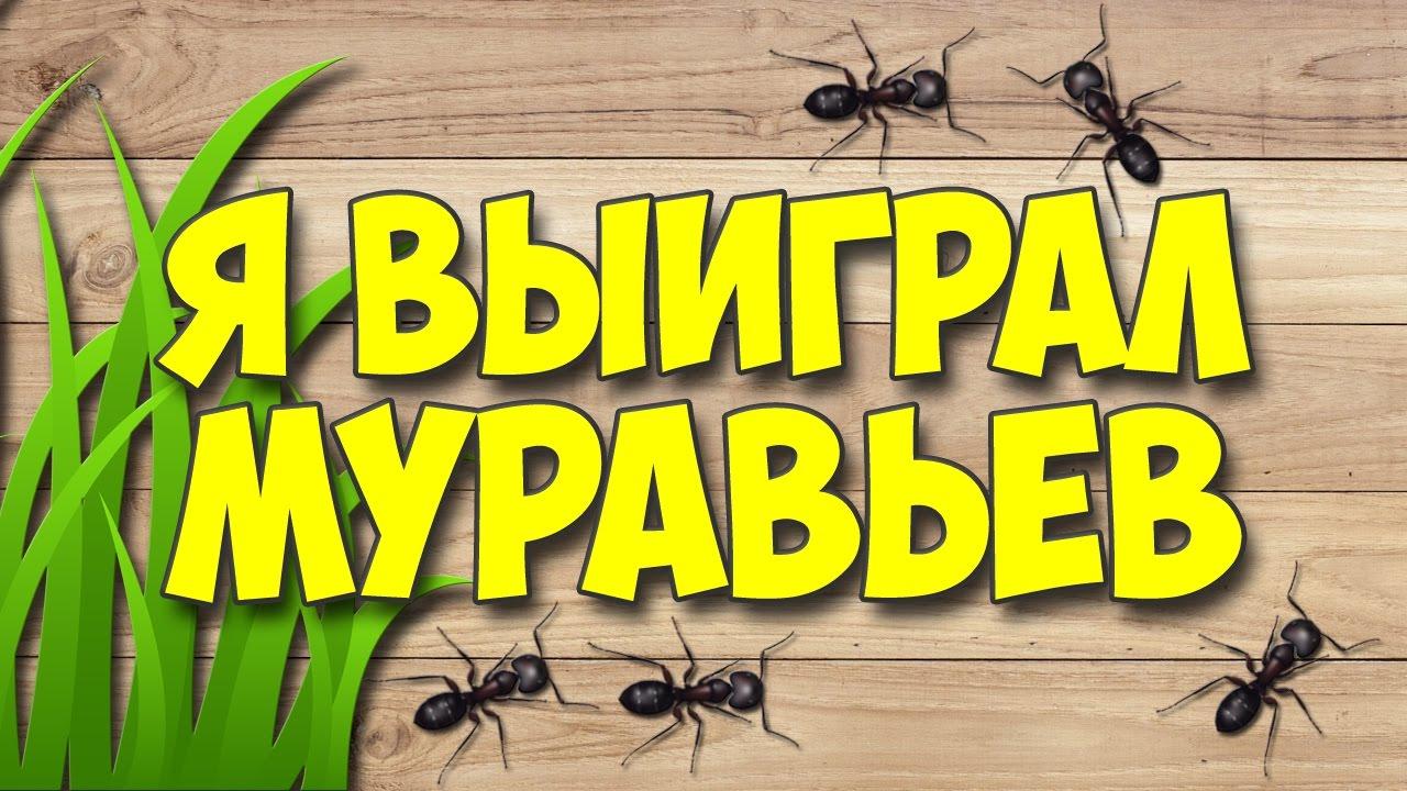 Первое знакомство с муравейником