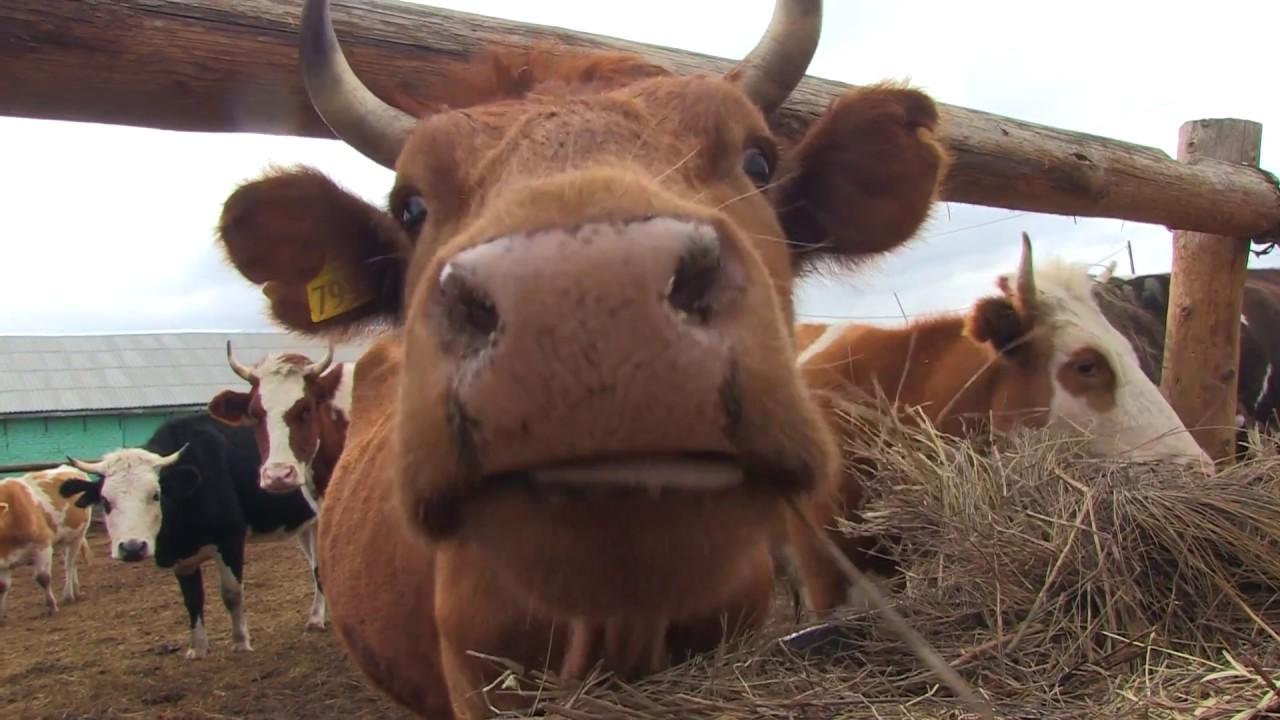 Крестьянское фермерское хозяйство Кочкиных 2017