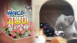 [까까캔디] 아랫층 고양이때문에 잠 못자겠다는 캔디냥이| 고양이 캣타워 |캣타워서 자는 고양이 |캣타워는내꺼다옹