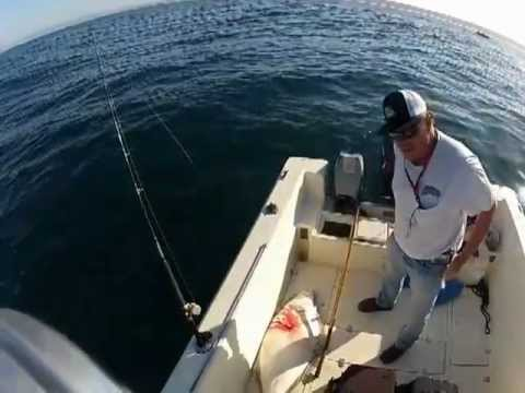 Fishing Santa Monica Bay for WSB & halibut 6-5-12