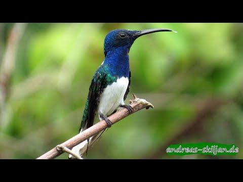 Colombia wildlife