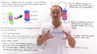Proteasome complex