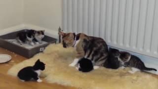 Вызов ветеринара на дом для кота(, 2017-02-05T18:55:41.000Z)