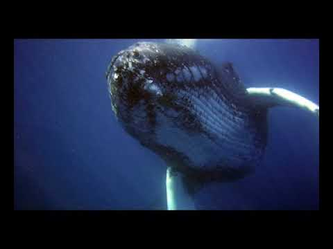 whale song 8h - Relaxing music