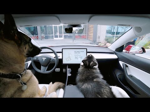 The Woody Show - Tesla Has a Safe Way to Lock Your Dog in The Car Alone