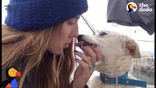 Stray Puppy Befriends Travelers Who Find Him a Home  | The Dodo thumbnail