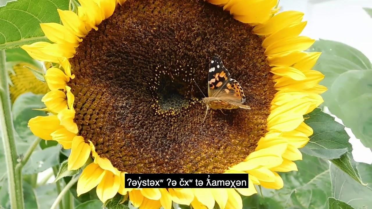 Butterfly And Dragonfly In Hən Q əmin əm Youtube