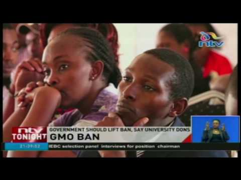 Government should lift ban on GMOs, say university dons