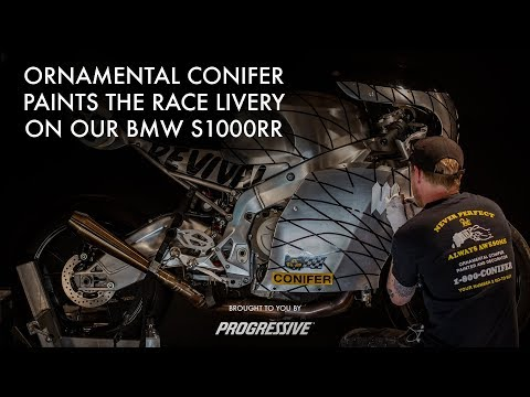 Ornamental Conifer and our BMW S1000RR - Presented by Progressive