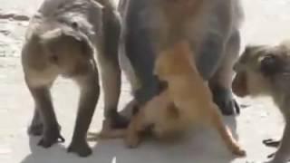 monkey ka cat ka sth sex