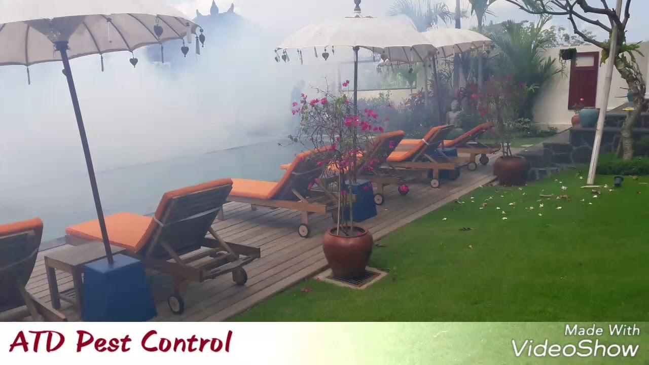 fogging bali pest control bali youtube