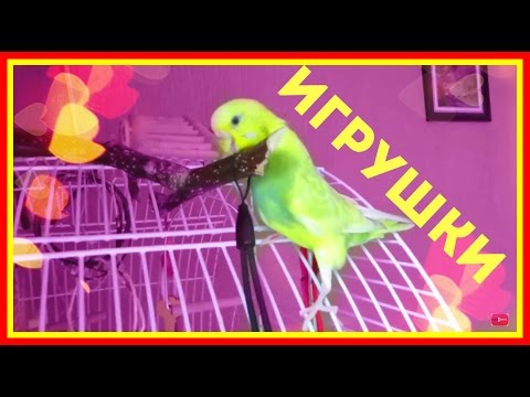 Вопрос: Какие бывают игрушки для домашних птиц попугайчиков?