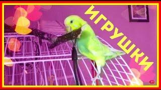 видео Как сделать попугаю игрушку своими руками?
