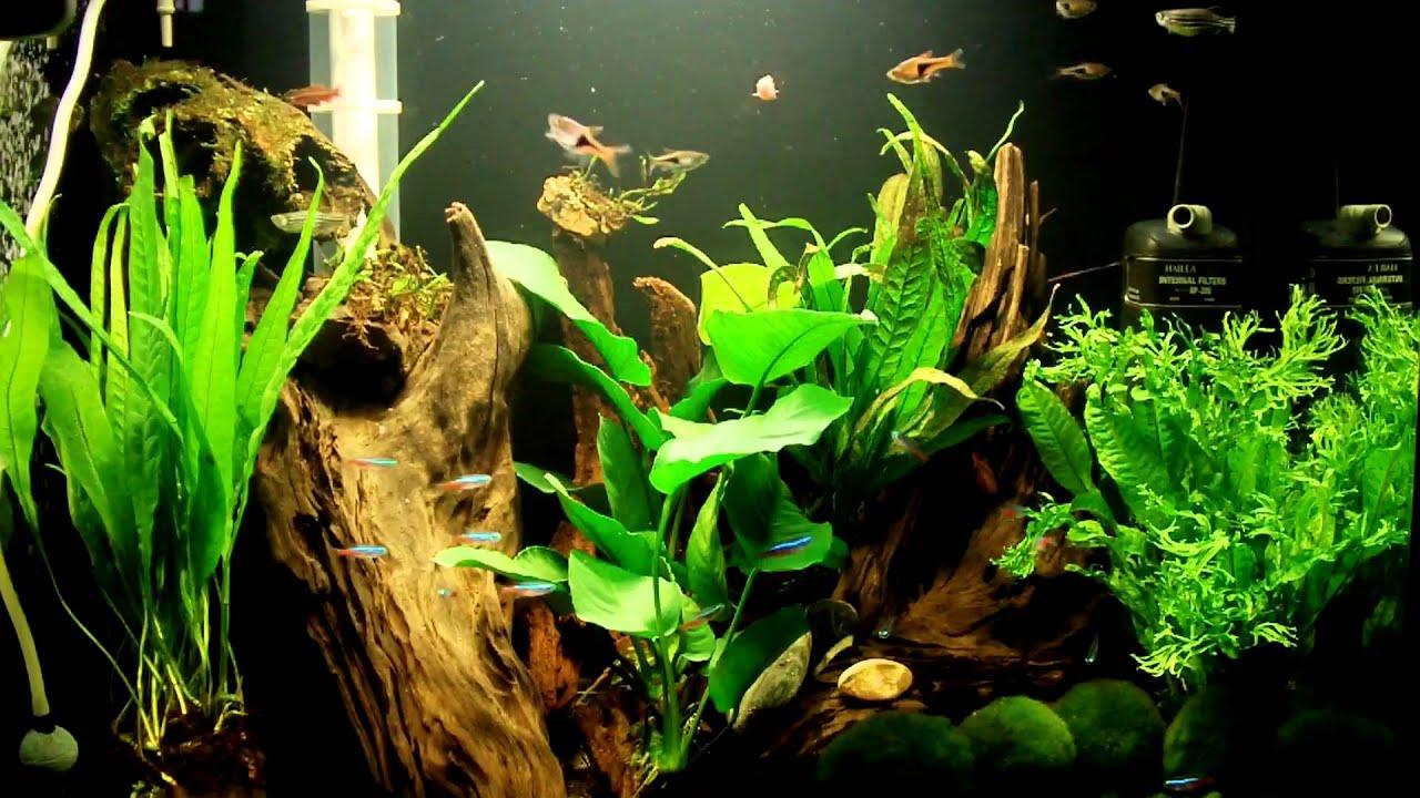 more plants for my 60 liter aquarium part 1 youtube. Black Bedroom Furniture Sets. Home Design Ideas