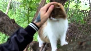 Самая ласковая кошка в мире