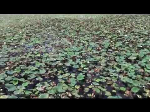 ¿que-le-pasa-a-un-lago-en-10-años?-el-misterio-del-lago-culligan-en-sugarland---skywind007