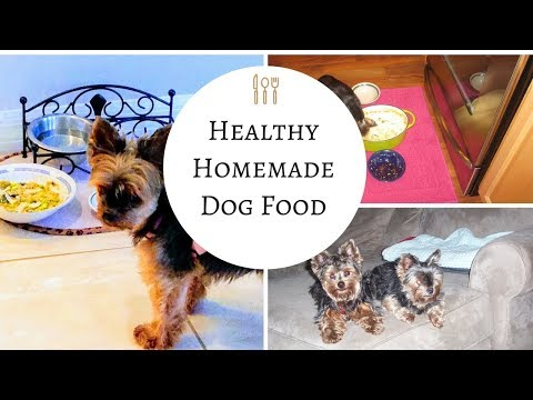 Homemade Dog Food - So Easy and So Good for your dogs