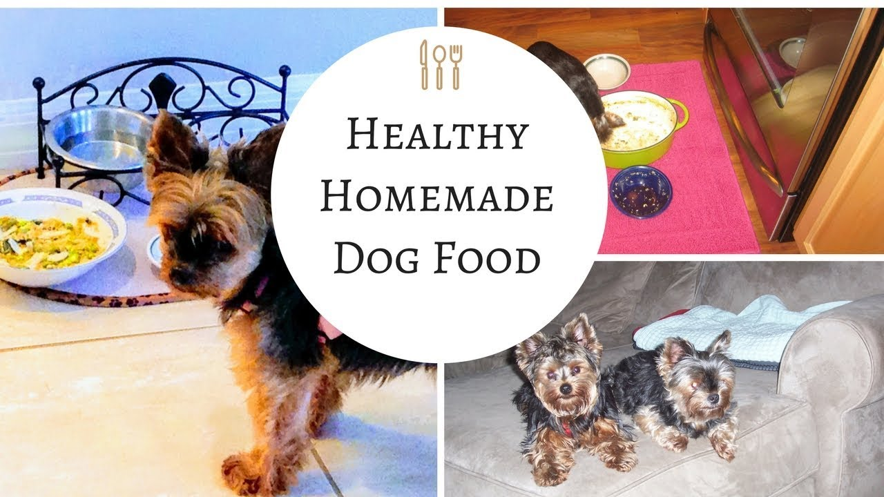 Homemade dog food so easy and so good for your dogs youtube forumfinder