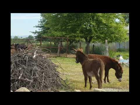 DONKEYS, HORSES // ДР@КА ОСЛА И ЖЕРЕБЦА