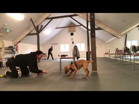 Puppy Foundations | Lucky 16 weeks