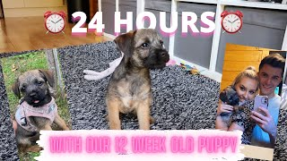 24 HOURS WITH A 12 WEEK OLD BORDER TERRIER PUPPY! | PUPPY DAILY ROUTINE