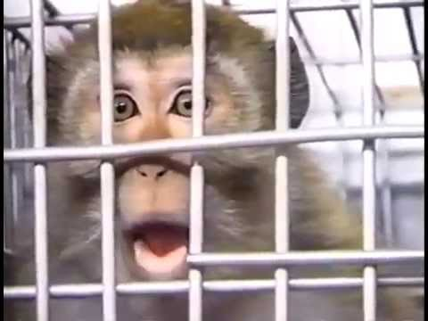 Columbia University Primate Experiments 2003