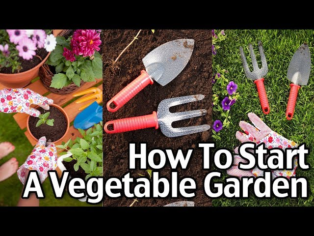 How To Start A Vegetable Garden For Cheap - Starting Seeds Indoors