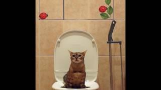 Масик писает (кот смывает унитаз)