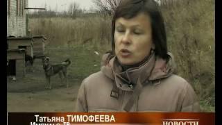 Великолукский центр милосердия для животных,  2008г..