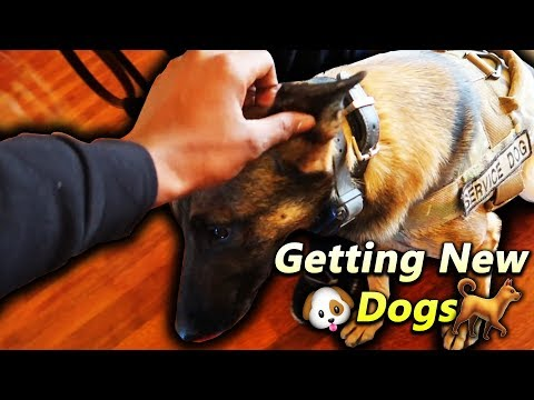 Im Surprising My Family With New Dogs!