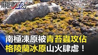 冰不見了!南極凍原正被青苔蟲攻佔!格陵蘭冰原山火肆虐! 關鍵時刻20170810-5馬西屏 朱學恒 傅鶴齡