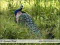 Bird Photography in India | Indian Nature & Wildlife Photographer Surinder Singh, New Delhi, India
