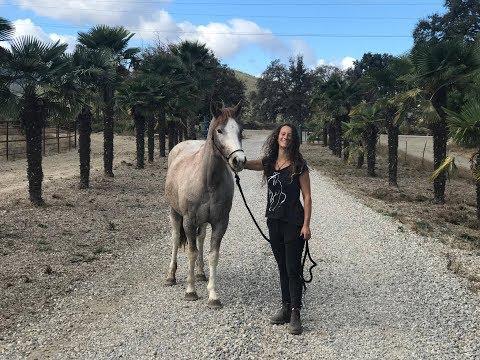 """Bild: Von """"unberührbar"""" zur Freiarbeit - das Video Taming a wild horse aus Kalifornien"""