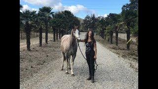 """Von """"unberührbar"""" zur Freiarbeit / Taming a wild horse [California]"""