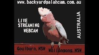 Wollongong thumbnail