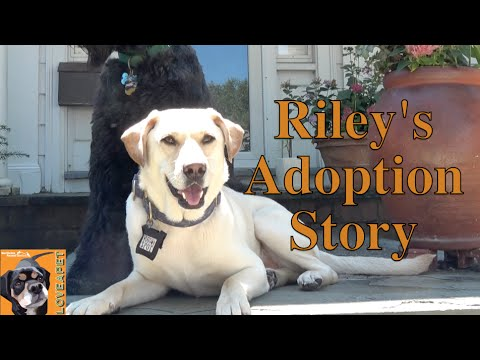 Riley and Celia: A Dog Rescue Story. Injured dog finds the perfect parent.