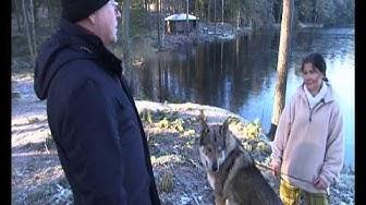 Silminnäkijä: Susi hukassa -  ote ohjelmasta 5.12.2012