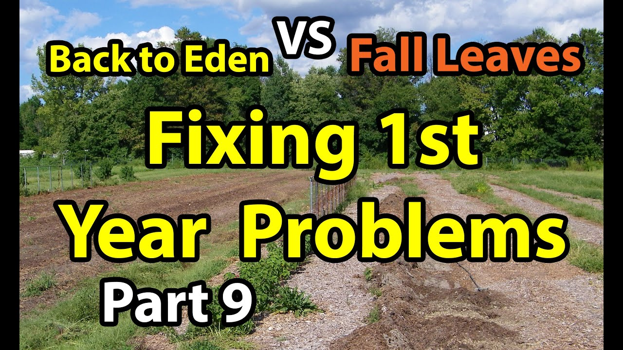 Back To Eden Organic Gardening 101 Method With Wood Chips Vs F L Deep Mulch Gardening Series