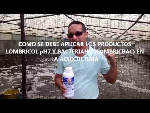 BENEFICIOS Y APLICACIÓN DE LOMBRICOL pH7 Y BACTERIANO EN ACUICULTURA