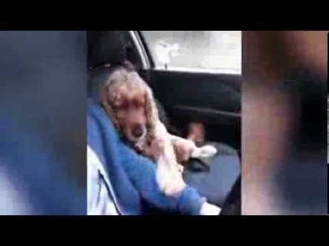 Scared Dog Has to Hold Owner's Hand During Car Ride
