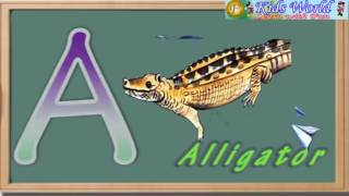 """""""A TO Z"""" INSECTS AND SEA ANIMALS"""