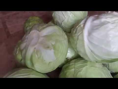 Отличный способ хранения капусты в свежем виде до весны.