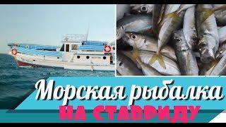 Морская рыбалка на ставриду Какие приманки и снасти брать на рыбалку