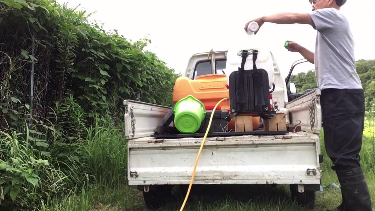 2020/7/10。楽農稲作。クログアイが大量発生した所にクリンチャーバスを撒いて1週間後。