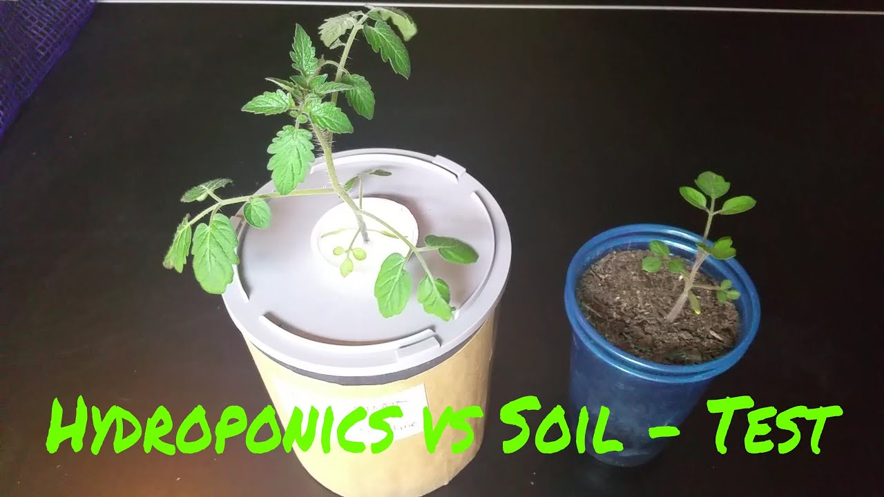 Hydroponics kratky versus soil test with tomatoes for Soil vs hydro